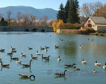 Sacajawea Park - Ducks on the Pond (8x12 inches)