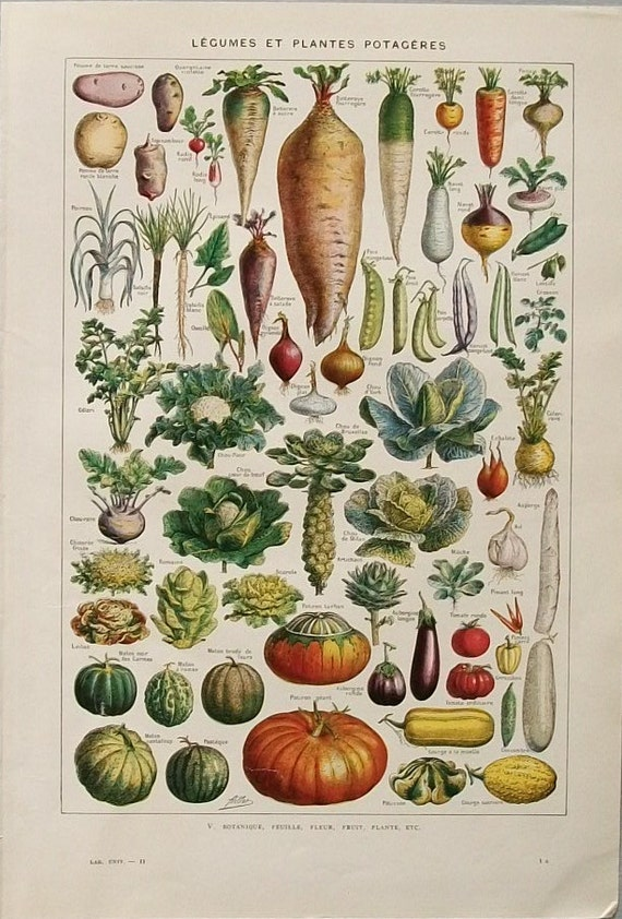 Antique French 1940s colour page iIlustratiion Vegetables Legumes paper projects scrapbooking, collage