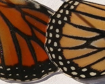 Real Butterfly Wing Earrings - Danaus Plexippus - Monarch - Reversible Natural Nature Bridal Wedding Statement Eco Chic Lepidoptera Custom
