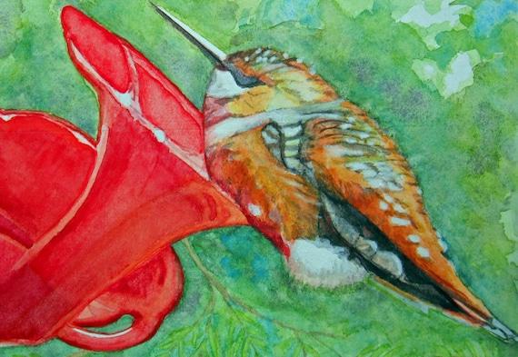 Set of 3 Sleeping Hummingbird Blank Greeting Cards