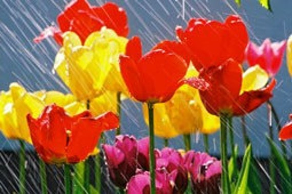 SPRING RAIN--All Natural Earth-friendly Clothing Fabric and Linen Softener---Wonderful