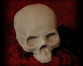 "Concrete Skull - Jaw-less Skull - ""Poe"""