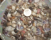 100 PLuS ASsOrTed DRiLLeD SeA SHeLLS SHaBby SHeLL CHiC