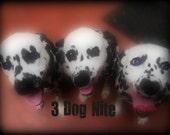 3 Dog Nite Sampler Pack Dog Treats