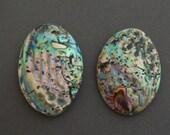 CLEARANCE! Abalone bean pendants large - 1 pendants