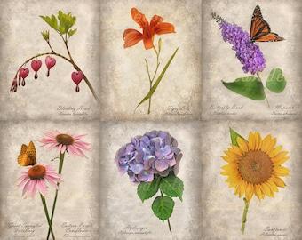Set of 6 Botanical Prints - Vintage Style Original Photographs - Instant Decor Flowers Garden Gift for Her Home Decor Wall Art