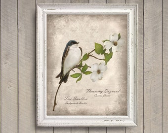 Swallow on Dogwood Botanical Print - Vintage Style Original Photograph - Bird Floral Flower Tree Beige Green Old Fashioned Print