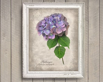 Hydrangea Botanical Print - Vintage Style Original Photograph - Distressed Home Decor Decorative Texture Feminine Wall Art