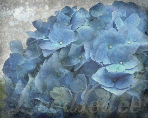 Baby Blue Hydrangea - Textured Distressed Spring Lovely Flowers Floral Decor Botanical Original Photograph