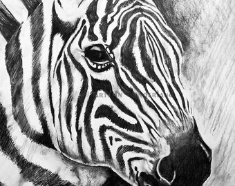 Wild Stripes Zebra Original Drawing 11x14 Print Reproduction Animal Black and White Portrait