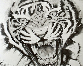 Aggression Original Tiger Drawing 11x14 Print By Joseph Palotas Used on TV Series Pilot Workers Comp