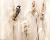 Chickadee in the Marsh - Original Photograph - Soft Sweet Cream Beige Tan Minimal Pale Neutral Home Decor Wall Art