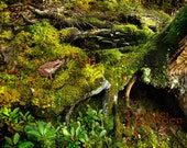 Froggy on Moss  - Original Photograph - Pond Life Forest Woodland Lush Green Damp Woods Lake House Cabin Home Decor Wall Art