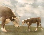 Mama Cow and Baby Calf - Original Photograph 8x10 - Soft Sweet Nursery Decor Pastel Kids Wall Art Farm Animals