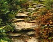 Forest Steps - Original Photograph - Woodland Adventure Hike Path Explore Nature Forest Autumn