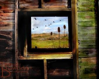 Through The Barn Window - Original Photograph - Rustic Weathered Farm Natural Neutrals Earth Tones Wall Art Home Decor