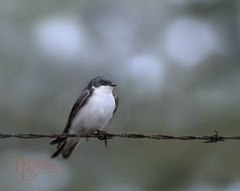 Tree Swallow - Original Photograph - Bird Perched on a Wire Periwinkle Slate Blue Grey Cloudy Rainy Day Home Decor
