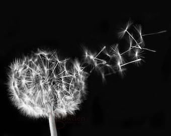 Wishes Take Flight - Original Photograph - Dandelion Seeds Black and White Minimal Minimalist Make a Wish