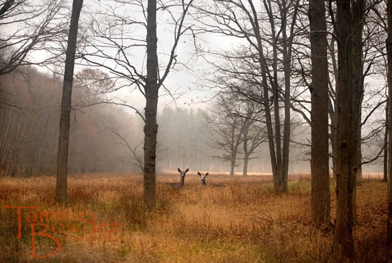 Deer in the Trees - Original Photograph - Foggy Autumn Fall Morning Woodland Outdoors Home Decor Wall Art