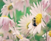 "Nature Photography - Baby Nursery - Cottage Shabby - Home Decor - Matte Finish Fine Art Photograph - ""Bee Friendly"""