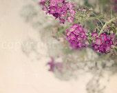 "Floral Photography - Cottage Shabby - Home Decor - Dainty Mauve Blooms  - (Pink, Mauve, Green)  - Fine Art Photograph 5X5 - ""Summer Cottage"""