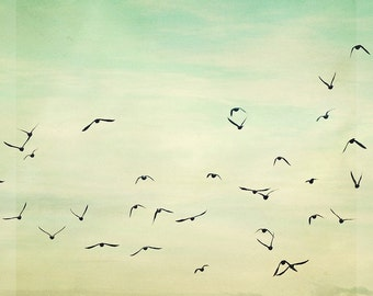"Bird Photography - Flying Soaring Birds Photography- Home Decor - Mint Green Baby Nursery - Fine Art Photograph  - ""Graceful Flock"""