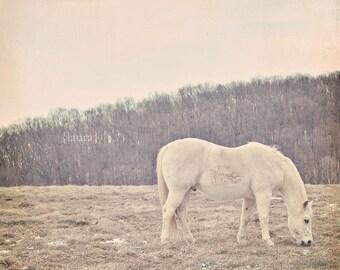 "SALE 50% OFF - Ivory Pony - Horse Photograph- Matte Finish - Baby Nursery - Home Decor - Fine Art Photography - ""Pretty White Pony"""