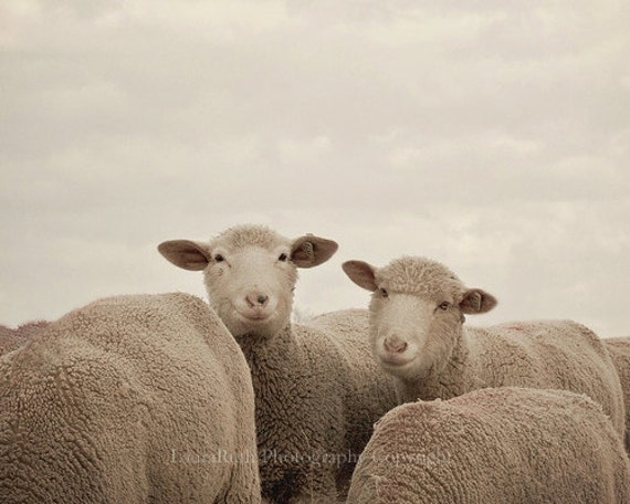 Sheep Photography - Smiling Sheep - Neutral grey and beige - Rustic Home Decor - Baby Nursery - Fine Art Photograph