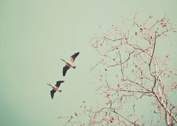 """Love Birds - Vintage Inspired and Dreamy - Wedding Gift - Home Decor - Fine Art Photography 5x7 - """"Let's get lost together"""""""