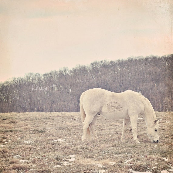 "Pony Photography - Horse Photograph - Beige, Ivory, Baby Nursery - Rustic Home Decor - Fine Art Photography 8x8, 8x10 - ""Pretty White Pony"""