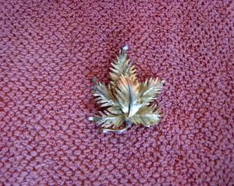 Vintage gold tone maple leaf brooch