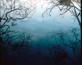 reservoir branches, limited print of polaroid photograph