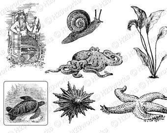 Sea Life Sketches, Marine Life Drawings, Black and White Illustrations, Ocean Art, Seashell Illustration, Sea Plants image, INSTANT DOWNLOAD