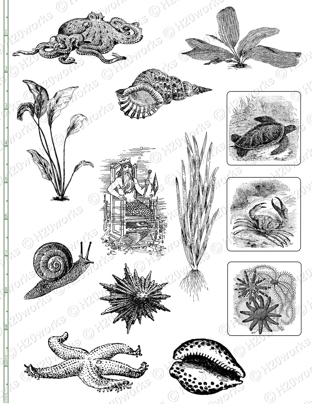 sea life sketches marine life drawings black and white