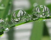 Reflections in Raindrops - Large 8x16 Print    --SALE--
