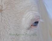 5x7 Photograph Frankie Blue Eyes Bald Faced Paint Horse