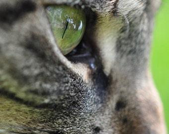5x7 Photograph Brown Gray Tabby Cat Reflection in Eye Macro