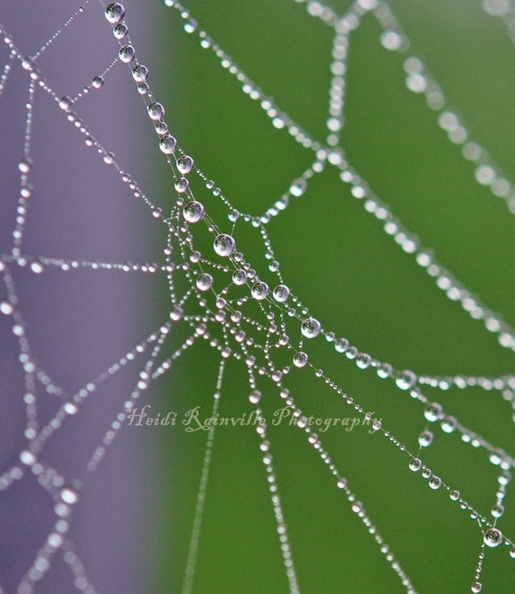 What a Wonderful Web We Weave Series - 4x5 Photograph - Dew on Spiderweb
