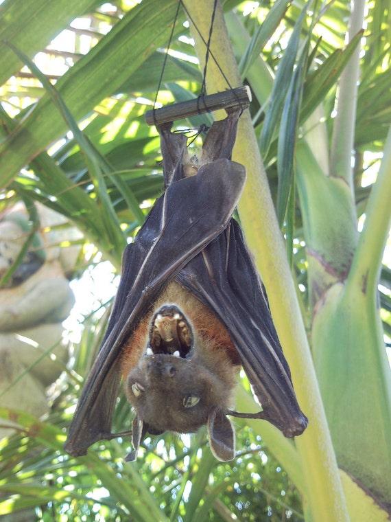 Sleeping Twilight Wolf Bat - SHIP FREE 1