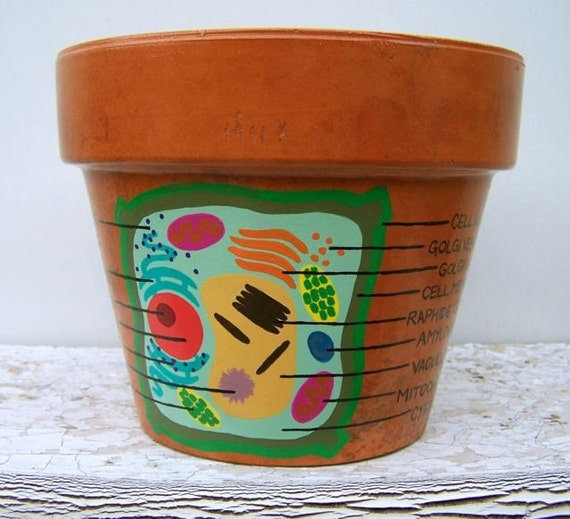 Plant Cell Diagram Hand Painted Flower Pot 5 5 By