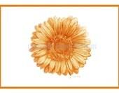 notecards -Gerber Daisy  - original art print in  orange, purple, magenta, blue, yellow or lime