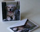 Golden Retriever-Puppy-Dog-Animal-Notecard-Card-Greeting card-Photography-Photo-Print