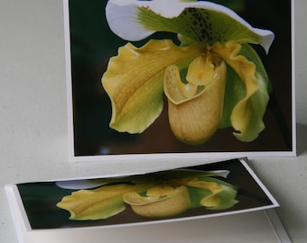 Flower-yellow-blank note card-nature-greeting card- photography-print-photo