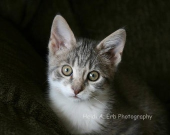 Kitten-cat-animal-Photography-print-photo-grey-Blank note card