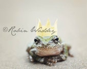 Frog Prince with Crown 8 x10 Photo Print