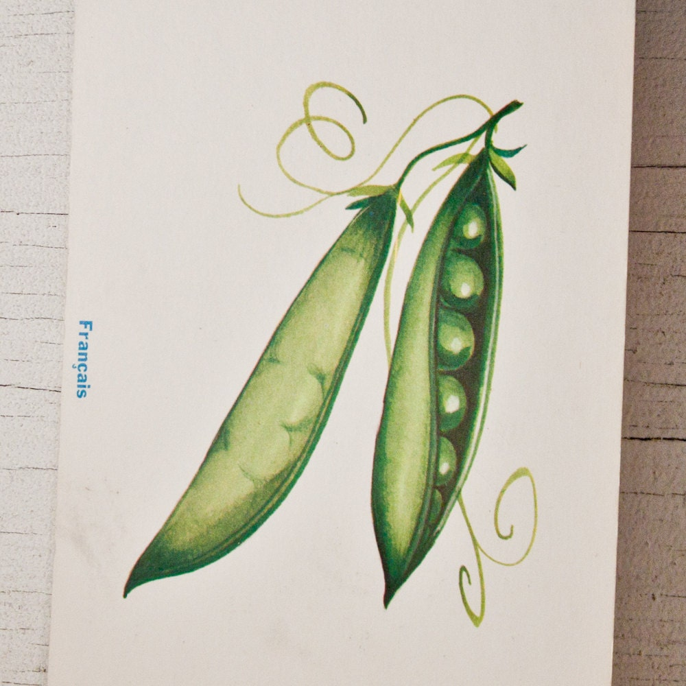 Vintage Illustration Vegetables Peas Flash Card 1960's