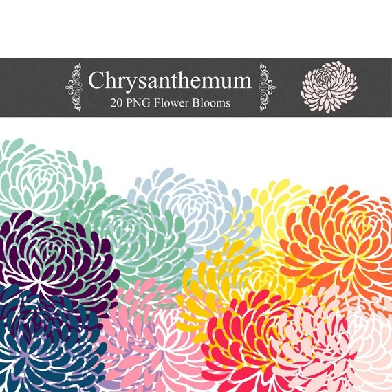 PNG Chrysanthemum Clip Art 300 dpi png floral clipart for invites, digital scrapbooking, web design