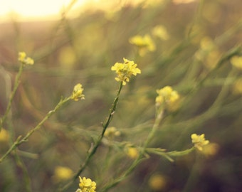 Summer Gold-8x10 Fine Art Photograph