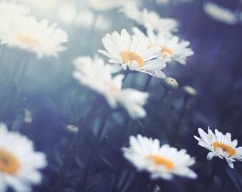 Daisies - Fine Art Photograph, room decor, wall art, garden, floral, girl's room, nature