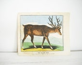 Antique print The Fallow Deer by John Lewis Marks, c.1832-48 -